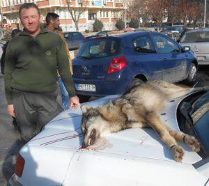Goran Veskovac iz Aleksandrovca - odstrelio vuka