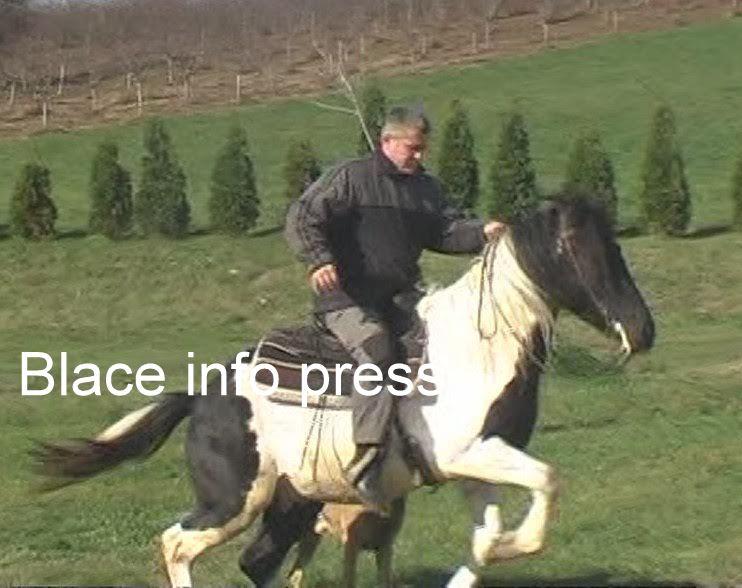 Srdjan Milanovic uzgajivaci konja
