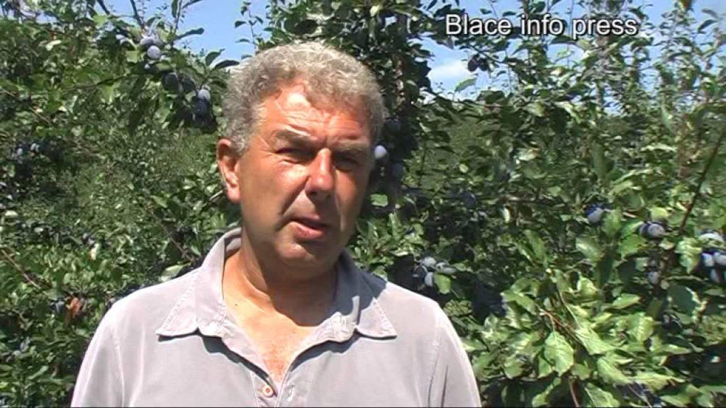 Blace – grad voćara : Najbolji šljivik i najbolji mladi voćar  – VEST IMA VIDEO